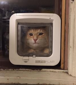 Batko Cat Door